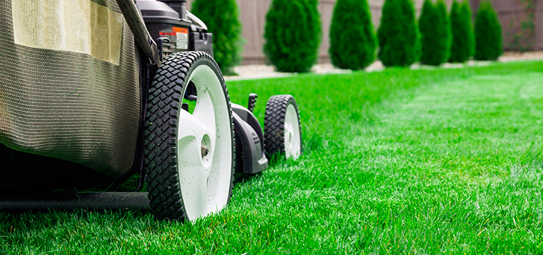 Lawn Care mowing healthy grass